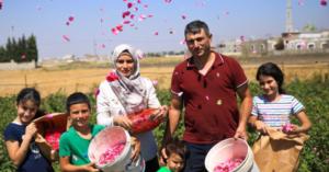 المفوضية العليا لشؤون اللاجئين : تجربة ملهمة للاجئ سوري متخصص بزراعة الورود في وادي البقاع اللبناني
